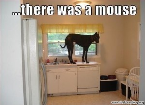 there-was-a-mouse-dog-in-the-kitchen